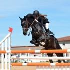 Paardensport: de ruiter leren springen