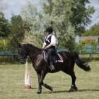 Hulpteugels voor het paardrijden