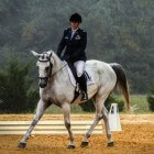 Paardensport: Dressuur