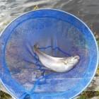 Forelvissen in Zweden en tips voor het vissen op forel