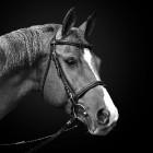 Paardrijden, welke kleding en spullen heb je nodig?
