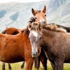 Paardrijden: op de voorhand