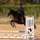 Paardensport tripalon